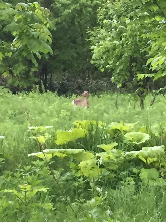 森の住民発見!
