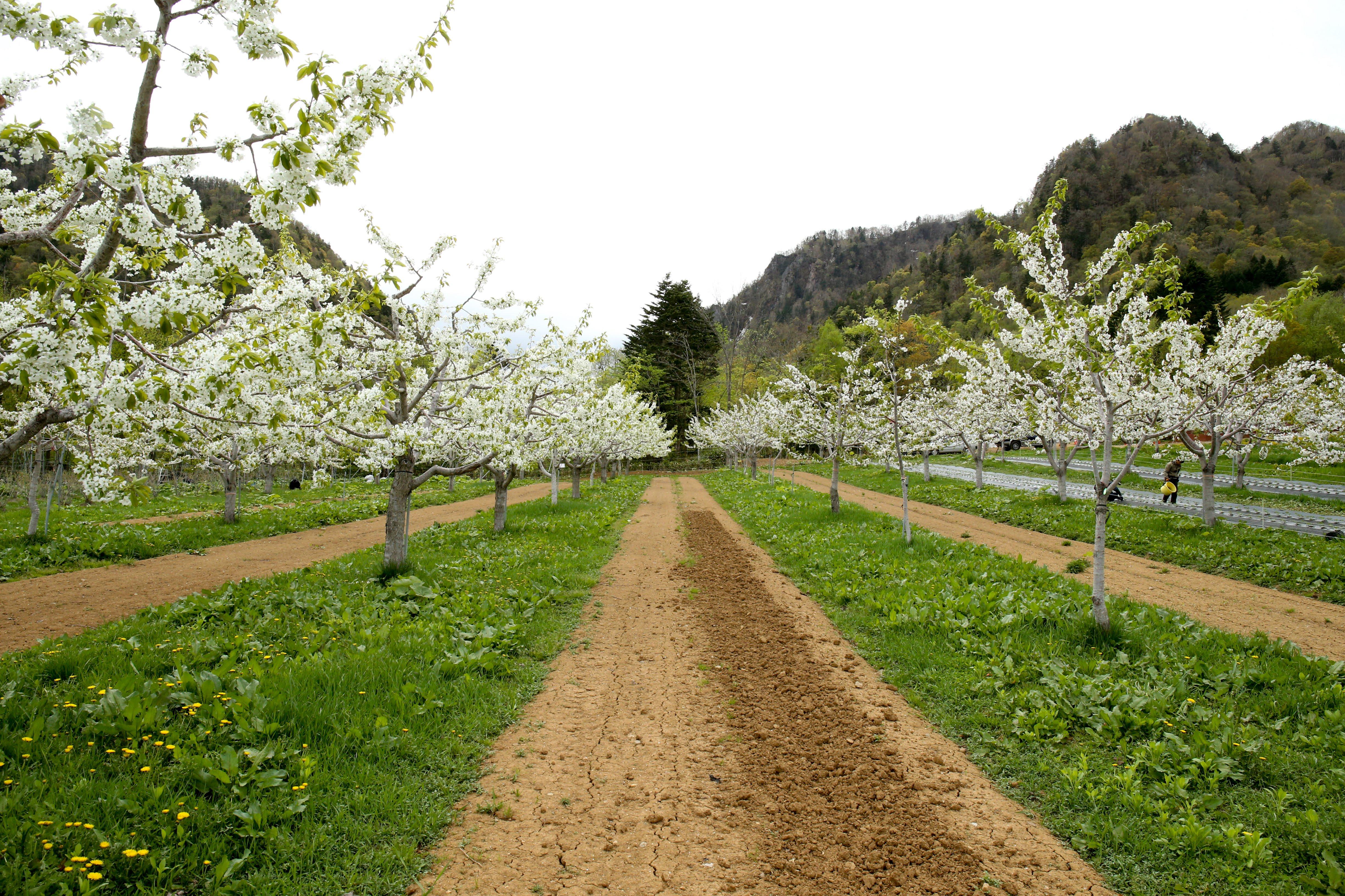 5月17日・18日お花見BBQと山菜採り体験ツアー開催のお知らせ。